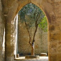 Tree seen through an archway in a courtyard